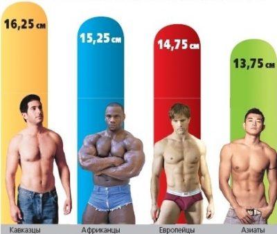 Пенисы мужчин разных расс